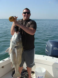 Tampa Bay Black Drum