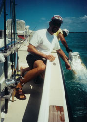 Tarpon released at boatside