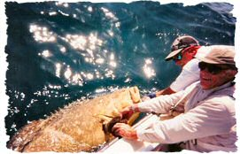 Catching goliath grouper in Florida