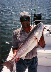 Capt Jeff with Breeder Redfish