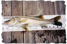 Slot Size Snook